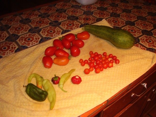 haul from the garden