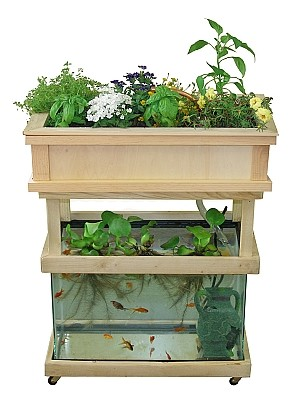 aquaponic gardening Desert Homespun