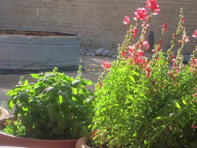 spring plants (1)