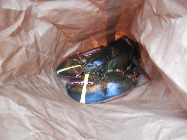 7lb lobster (2)