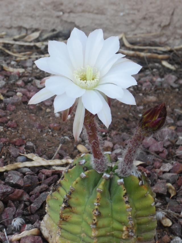 blooming (1)