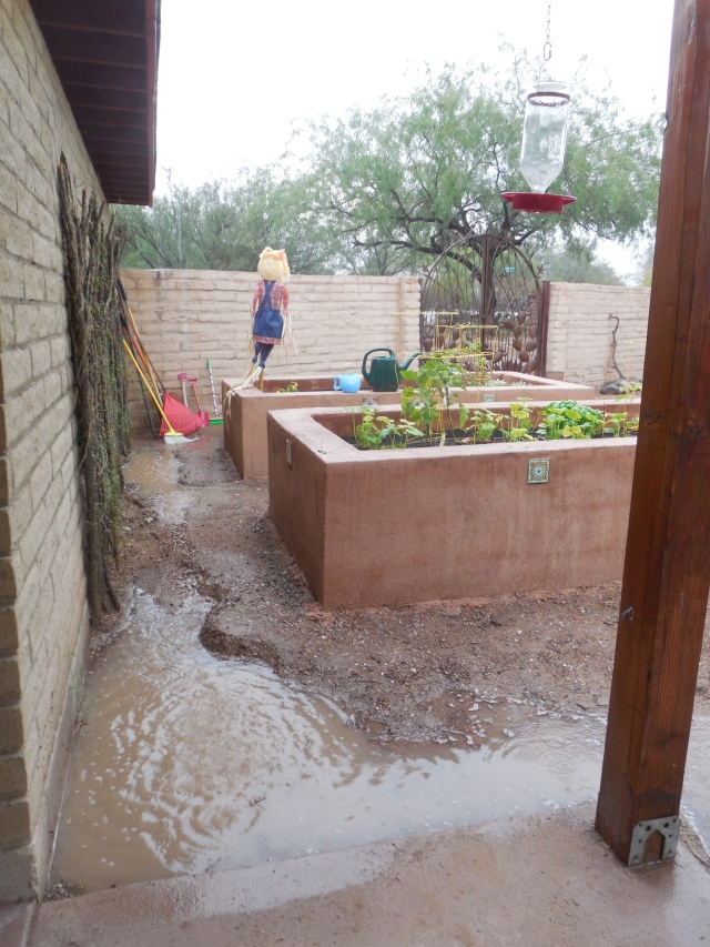 monsoon rain (1)