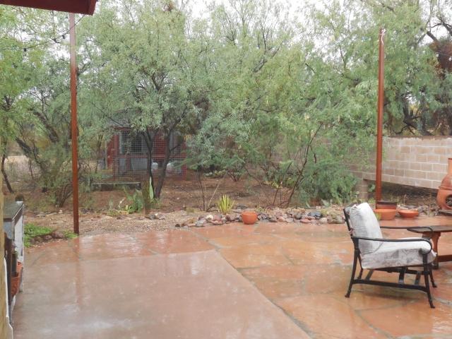 monsoon rain (3)
