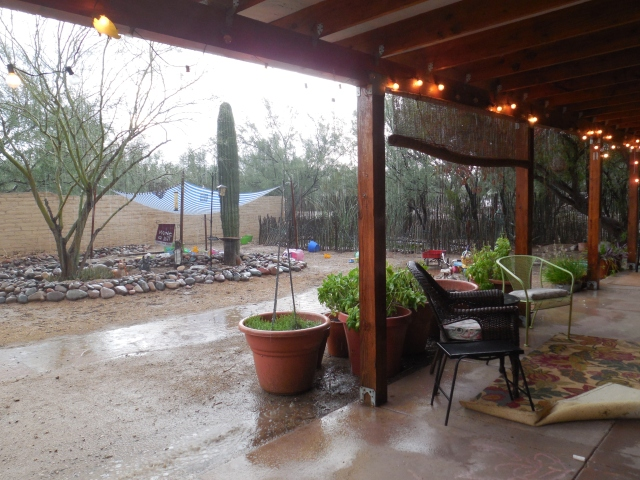 monsoon rain (6)