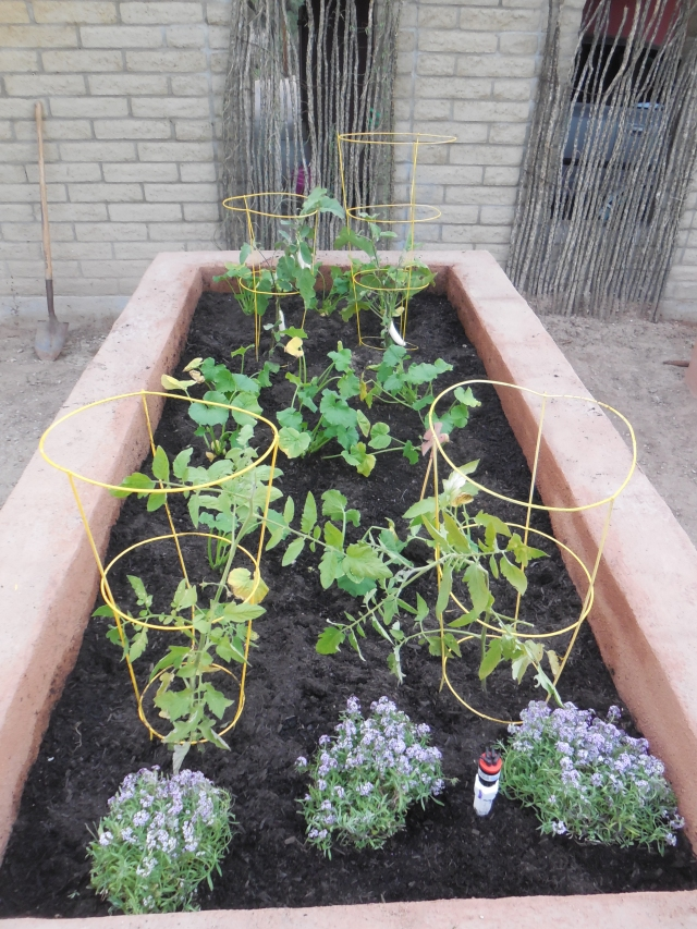 planted garden (2)