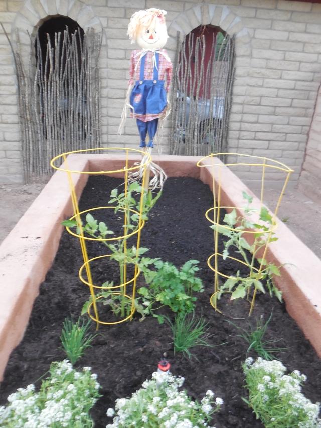 planted garden (3)