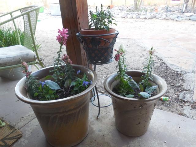 sunday gardening (10)