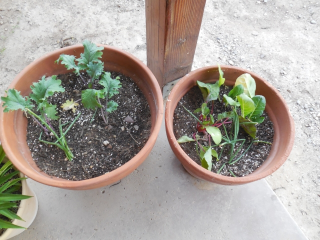 sunday gardening (2)