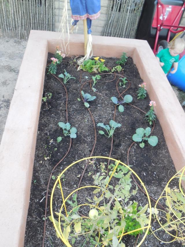 sunday gardening (5)