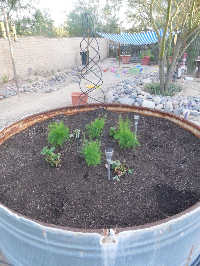 sunday gardening (6)