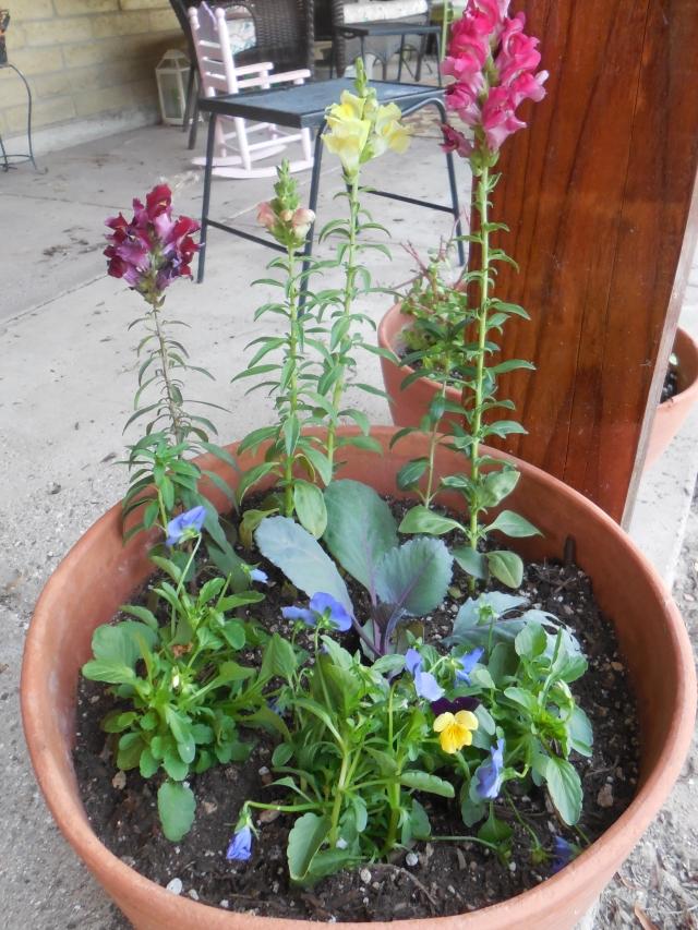 sunday gardening (9)