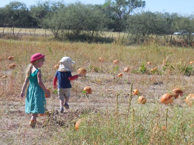 pumpkin patch (28)