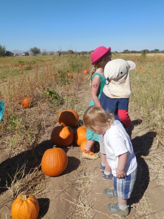 pumpkin patch (31)