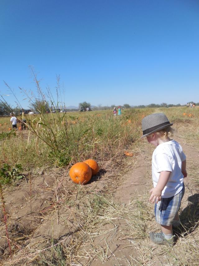pumpkin patch (34)