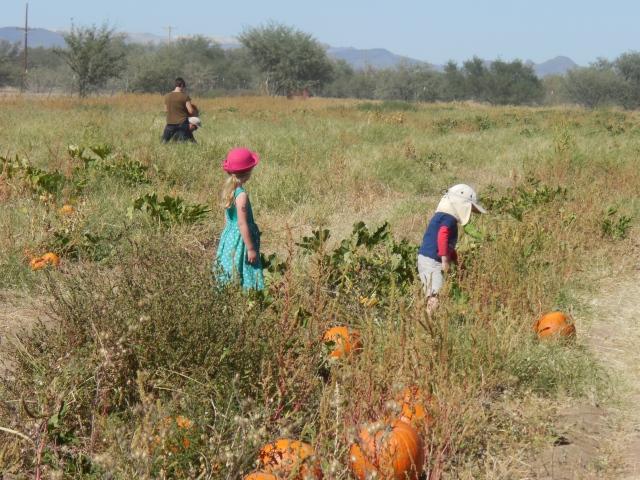 pumpkin patch (35)