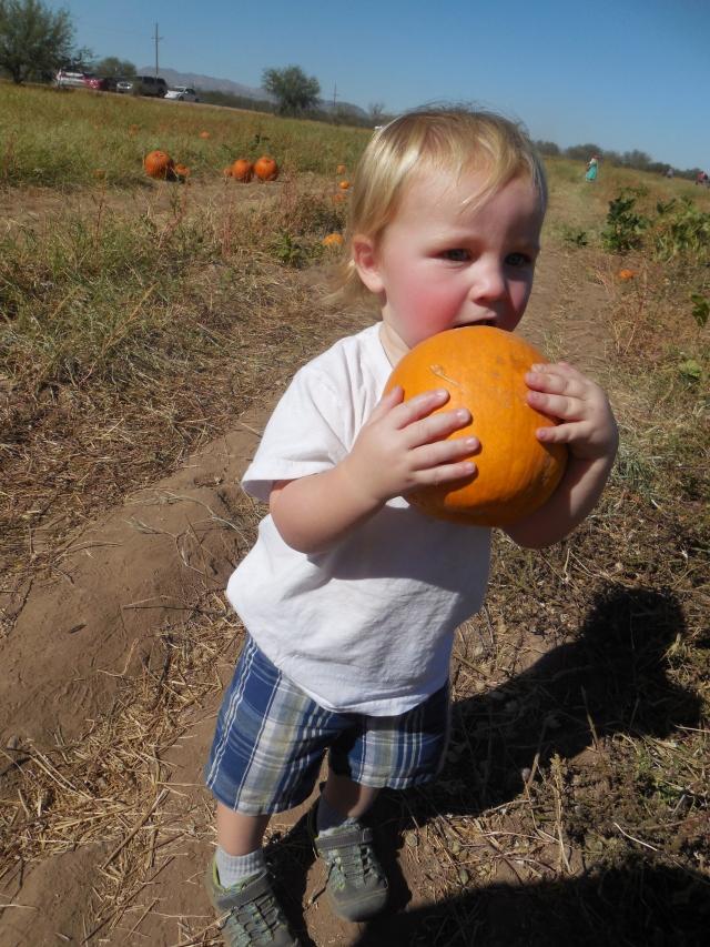 pumpkin patch (36)