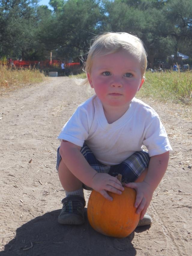 pumpkin patch (40)