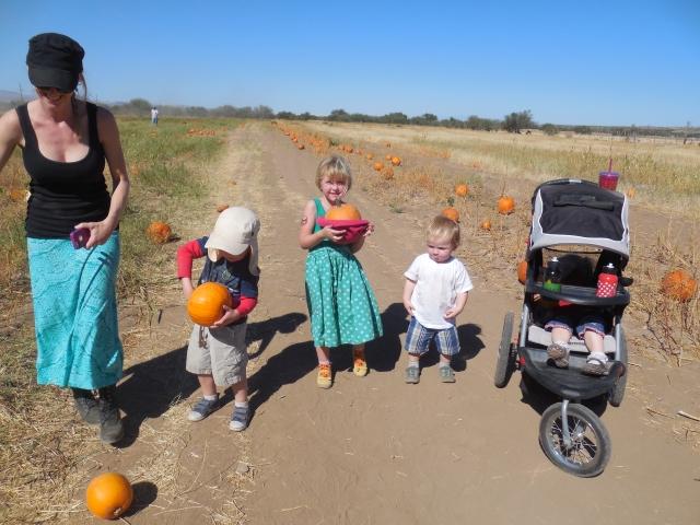 pumpkin patch (42)