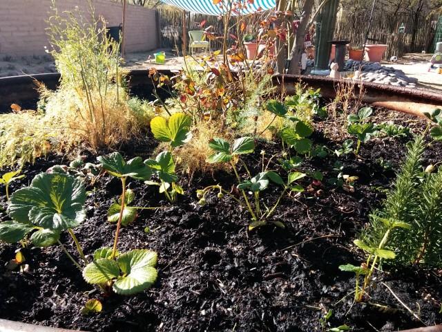 janaury garden (10)