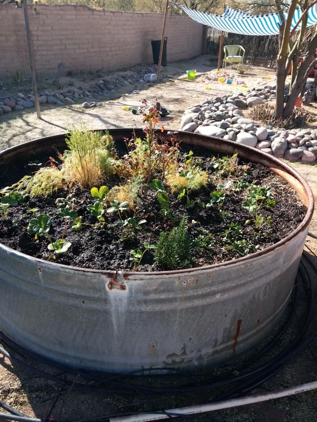 janaury garden (8)
