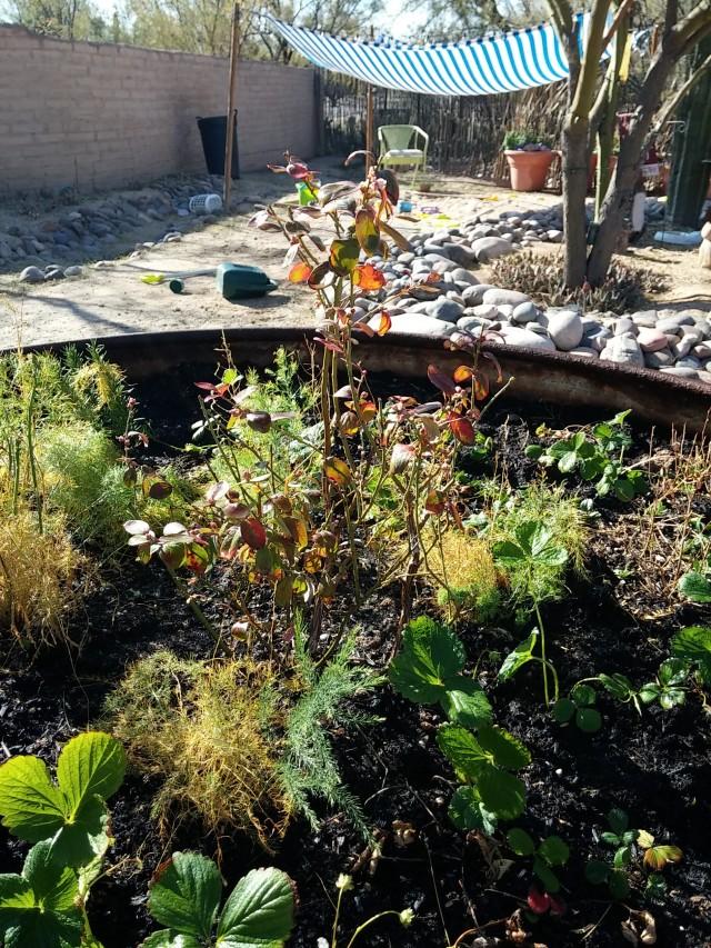 janaury garden (9)