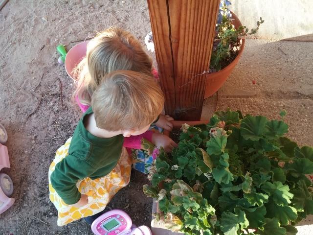 fairy garden hunt