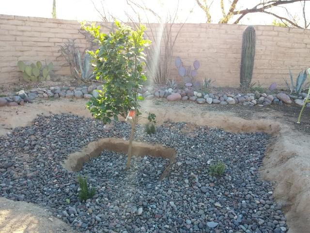 spring garden (10)