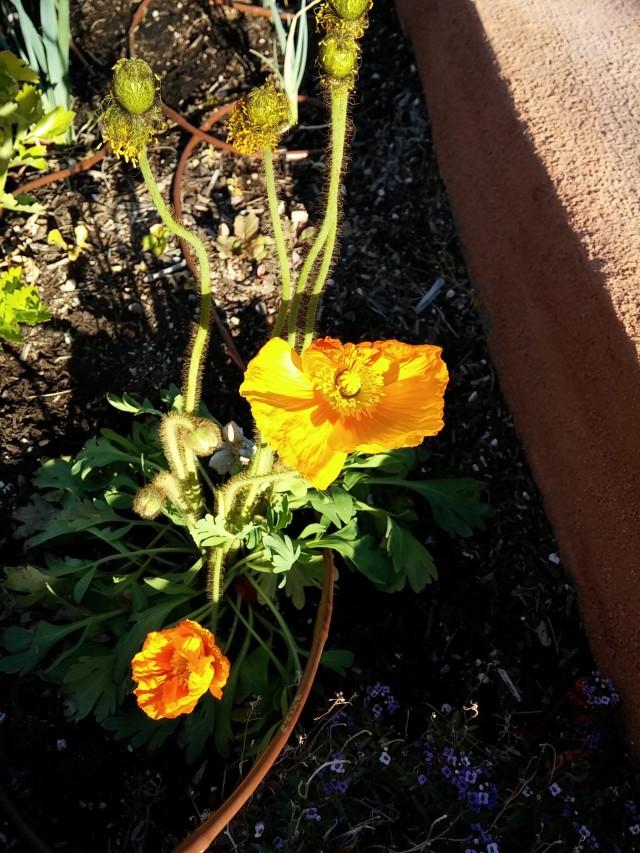 spring garden (11)