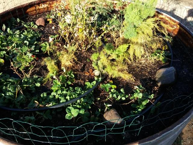 spring garden (17)