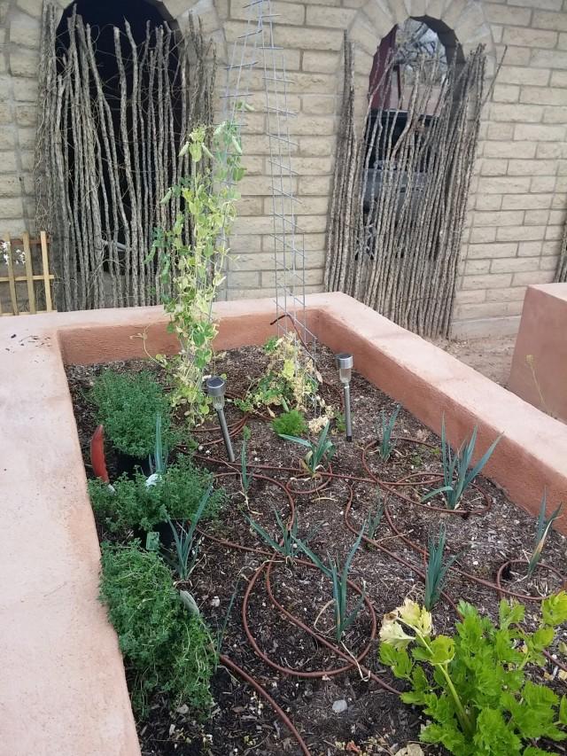 spring garden (22)