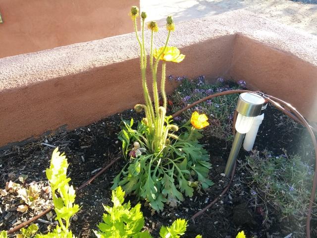 spring garden (7)