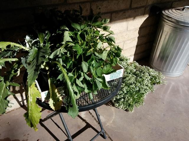 plants still needing to go in the veggie beds