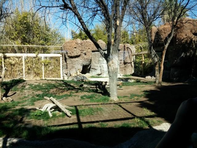 zoo (12)