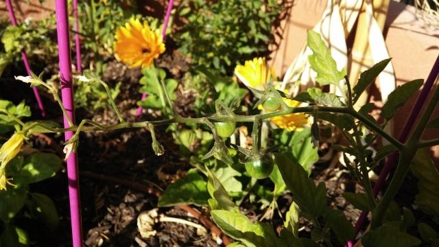 garden (7)