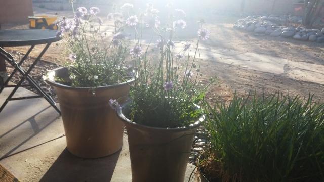 spring garden (5)