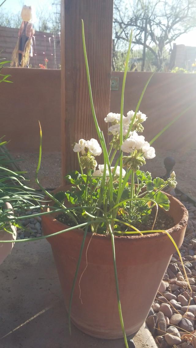 spring garden (8)