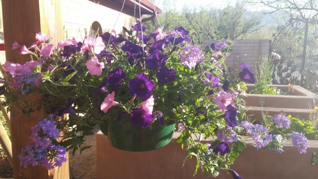 spring garden (9)