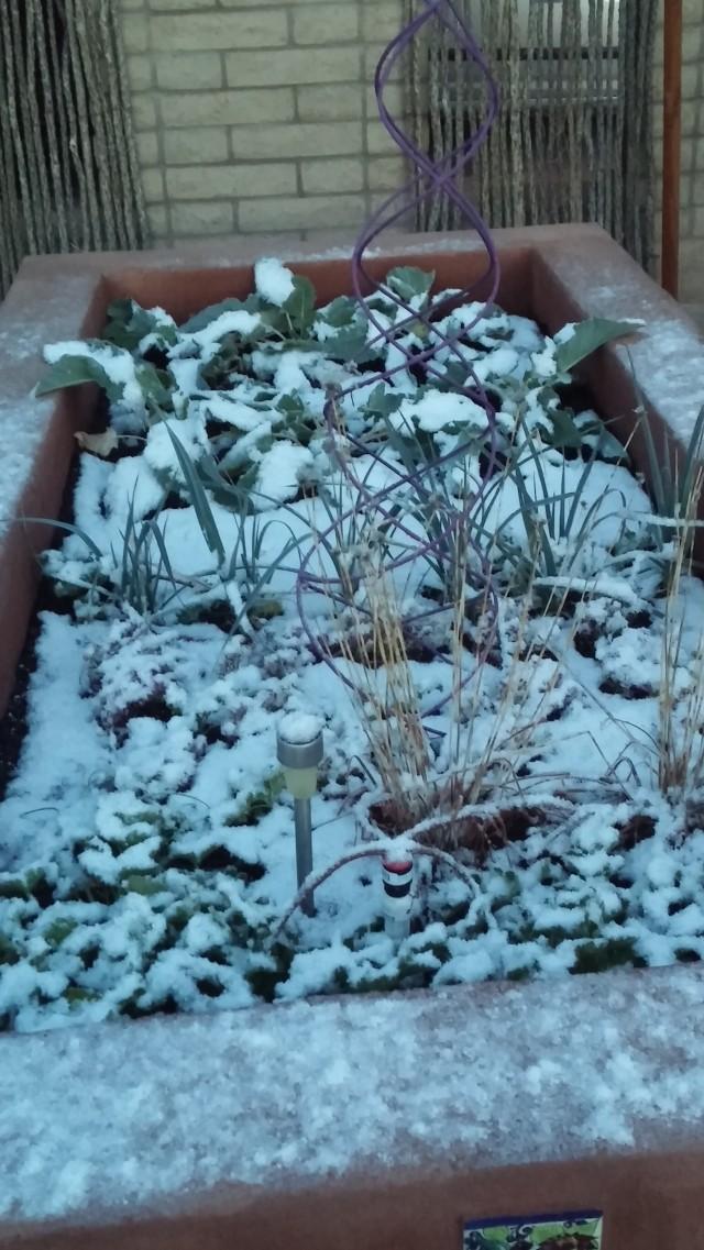 snow (16)