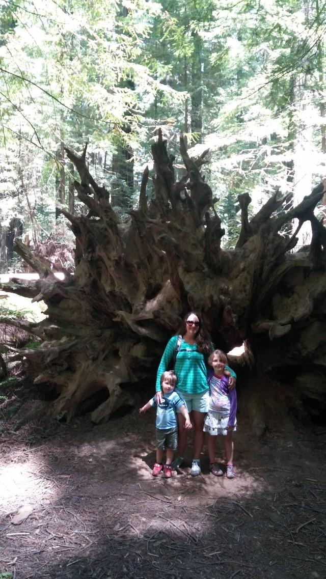 redwoods (44)