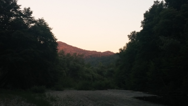 redwoods (9)