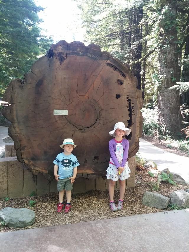redwoods instag (1)