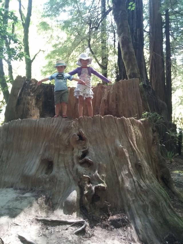 redwoods instag (2)