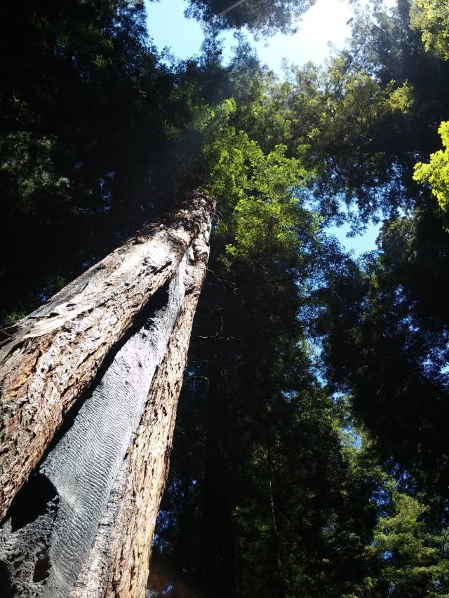 redwoods instag (3)